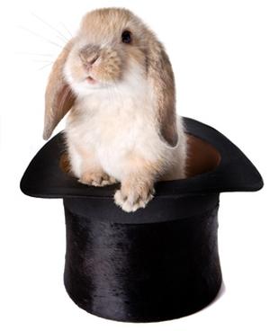 magic hat rabbit - photo #7